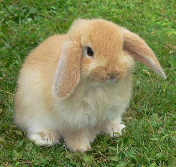 comprar jaula para conejo barata