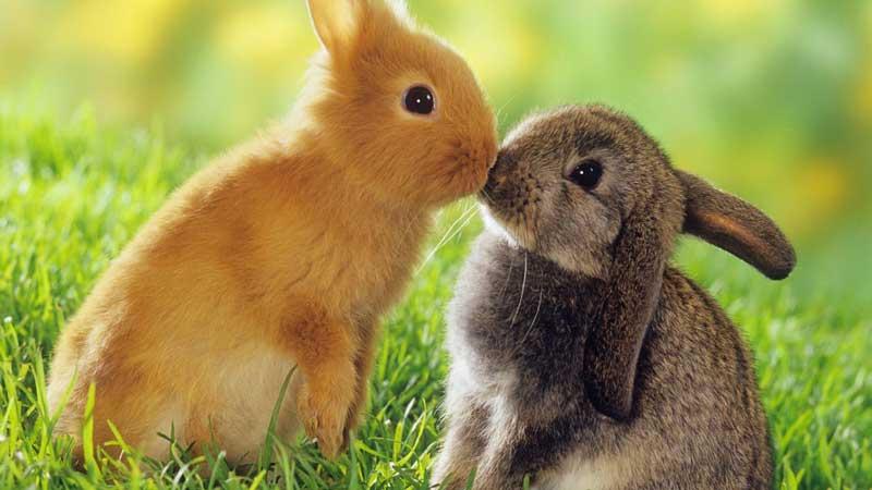 jaulas para conejos baratas