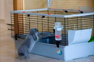 jaula conejo grande