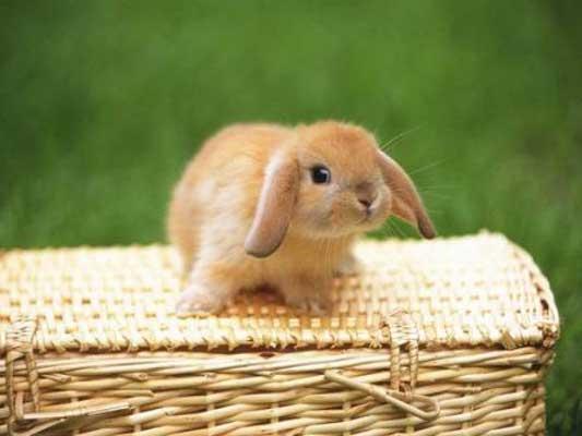precios de jaulas para conejos