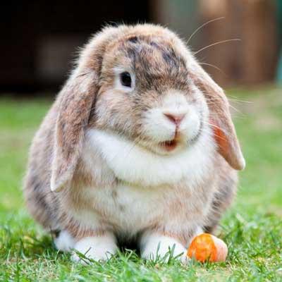 jaulas para conejos domesticos