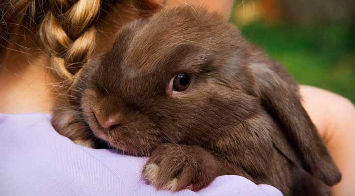 cuidados de los conejos domesticos